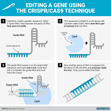 Genome Editing Tripping The Alarm How Crispr Genome Editing Can Accidentally