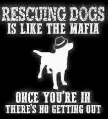 Rescue Dog Quotes Best 48 Twitter Sundance Canine Rescue Society Pinterest