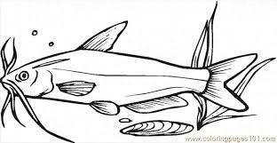 Small Picture Catfish 8 Coloring Page Free Catfish Coloring Pages