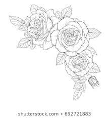 薔薇の花線画の画像写真素材ベクター画像 Shutterstock