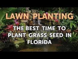 to plant grass seed in florida