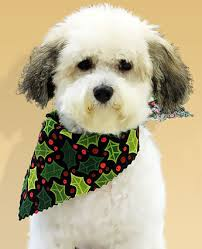 pet dog grooming in lancaster pa
