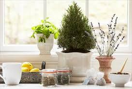 Small Picture Start an Indoor Herbal Tea Garden PG everyday PG Everyday