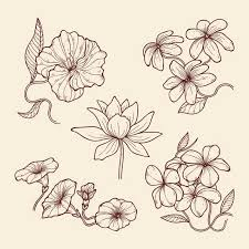 Hand Drawn Vintage Botany Flowers Vector Free Download
