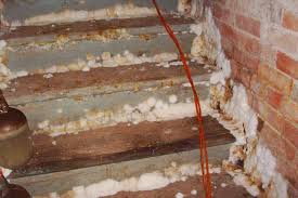 lofty inspiration how to remove mold from basement walls do i my removing mold from basement walls o49