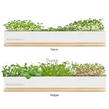 Kitchen Herb Garden Kit Similiar Herb Garden Growing Kit Keywords