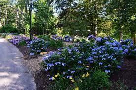 north american hydrangea test garden