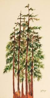 pine trees a watercolor painting by