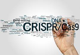 Genome Editing Genome Editing Challenges For The Future 22 23 09 2017