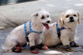 Παπούτσια για σκύλους!