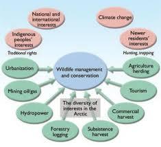 college essays college application essays conservation of nature conservation of natural resources