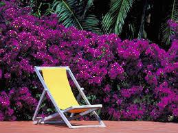 purple plastic adirondack chairs. Cleaning Outdoor Furniture Purple Plastic Adirondack Chairs