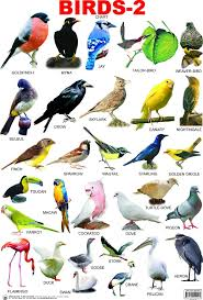 Birds Chart With Names In English Pin By Akshata On Indian Birds 1 Learn English English