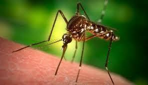 مرض الملاريا - Posts   Facebook