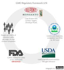 gmos does regulation ensure safety nutrition wonderland the