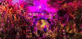 Holiday Lights At Sf Conservatory Lightswitch Night Bloom