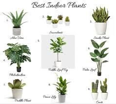 best indoor plants for office. Lovely Best House Plants BEST INDOOR PLANTS KELLY BOYD DESIGN Montreal Based Interior Indoor For Office N