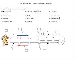 Sensation Chart Using The Diagram Below Label The Following A M