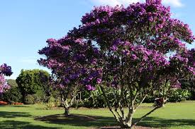 5 of the best trees with small root