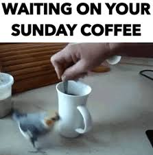 If you love coffee and good jokes, you may just enjoy these coffee memes. Top 30 Sunday Coffee Gifs Find The Best Gif On Gfycat