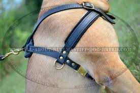 safe and cozy leather dog harness