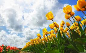 spring wallpaper hd widescreen. Wonderful Widescreen Wide  In Spring Wallpaper Hd Widescreen