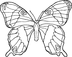 Small Picture Butterflies Coloring Pages Clip Art Library