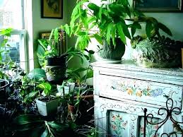 indoor garden room dining plants plant great small design living