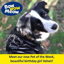 could your pet be our new pet of the week