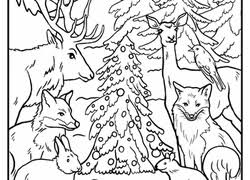 Coloring Pages Forest Animals Forest Coloring Pages Printables Education Com