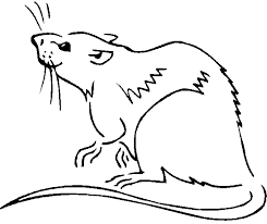 Small Picture Rat Coloring Pages Kids Coloring Free Kids Coloring