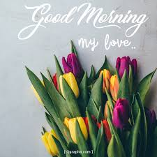 good morning tulip flower greeting
