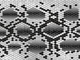 Snake Skin Pattern Custom Snake Skin Pattern In Black And White Stock Vector Colourbox