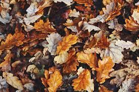 Aesthetic Laptop Autumn Wallpapers ...