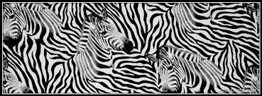 Zebra Patterns Custom Zebra Pattern Facebook Covers Zebra Pattern FB Covers Zebra