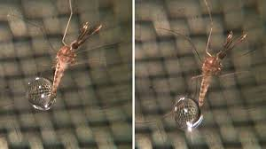 Kollision Regentropfen Können Einer Mücke Nichts Anhaben Spiegel