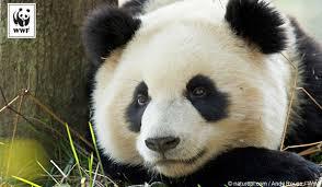 Thank You Ecards World Wildlife Fund