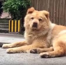 Hund Wartet Täglich 12 Stunden Auf Sein Herrchen Welt