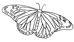 Small Picture Butterfly coloring pages Butterfly coloring pages for kids 39