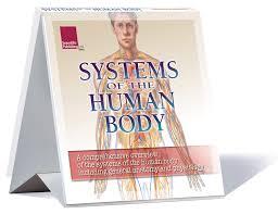 Anatomy Flip Charts Flip Charts Scientific Publishing
