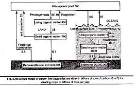 essay on the carbon cycle diagrams ecosystem simple model of carbon flow