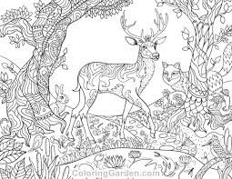 Coloring Pages Forest Animals Coloring Pages Forest Animals Parkspfe Org