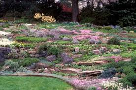 Small Picture Rock garden with sloping hillside alpine plants mixture flowers