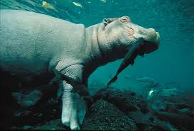 symbiotic relationships a business lesson from the hippo how you can use symbiotic