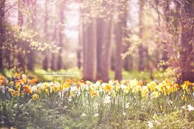 Image result for spring day images