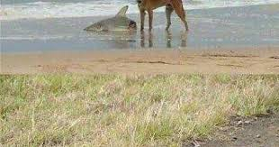 Imgur Eating Two - Album A Snakes Just Dingo While On Shark Wrestle