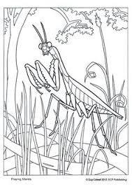 Small Picture DNA Coloring Page Educationcom Middle School Science