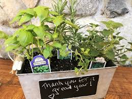 mini herb gardens for gifts or just for fun