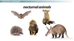 diurnal animals list for kids. Brilliant List Facts About Nocturnal Animals Lesson For Kids  Video U0026 Transcript   Studycom Inside Diurnal Animals List For