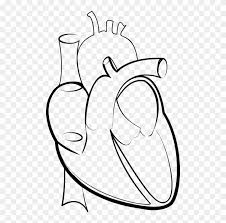 ✓ free for commercial use ✓ high quality images. Drawing Line Art Heart Hartlijn Human Heart Drawing Png Transparent Png 498x749 3978069 Pngfind